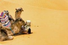 Sahara Desert em Tunísia com homem e camelos imagem de stock