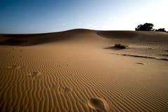 Sahara desert in Morocco. Dunes of Sahara desert during the sunset, Morocco Stock Photos