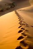 Sahara desert in Morocco. Dunes of Sahara desert during the sunset, Morocco Royalty Free Stock Photos