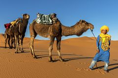 SAHARA DESERT, MOROCCO, APRIL 13, 2016. Tuareg man portrait with. Camel caravan on the Sahara Desert in Morocco on April 13, 2016. Traditional lifestyle royalty free stock photography