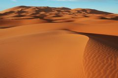 Sahara desert. Oasis in Sahara desert royalty free stock photos