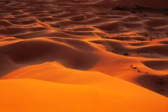Sahara desert. Orange dunes of the Sahara desert Royalty Free Stock Photo