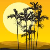 Sahara desert and palms. Sand dune, palm and sunset illustration Royalty Free Stock Image