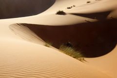 Sahara desert sand dunes. With light and shadows in evening light. Concept for traveling, adventure, and holiday Stock Photo