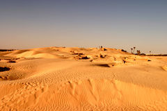 Sahara Desert sand dunes. Dry baron hot Tunisia oasis sand palm trees silica warm golden blue sky arid desolate empty Royalty Free Stock Photos
