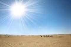 Sahara desert with sun. Douz, Kebili, Tunisia - September 17, 2012 : Beduins leading tourists on camels at the Sahara desert on September 17, 2012 in Douz Stock Photography