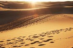 Sahara desert on sunset Stock Photos