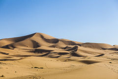 Sahara desert. A view from Sahara desert with many traces and steps Stock Image