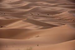 Sahara Desert Stock Photos