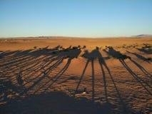 Sahara Dessert fotografia stock libera da diritti