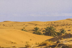 Sahara Royalty Free Stock Images
