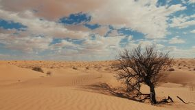 Sahara Landscape, Dunes, Wind and a Withered Tree stock video