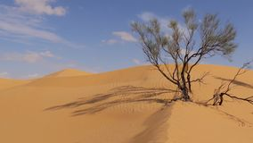 Sahara Landscape, Dunes and a Withered Tree stock video footage