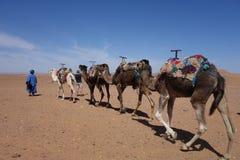 Sahara, Marokko, Kamel Lizenzfreie Stockfotografie