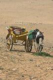 Sahara-Pferd Lizenzfreies Stockbild