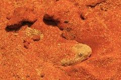 Sahara sand viper Royalty Free Stock Photos