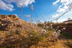 Sahara spring Stock Photo