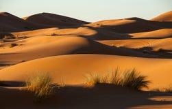 Sahara at sunset. Sunlight highlighting the dunes in the Sahara stock photos