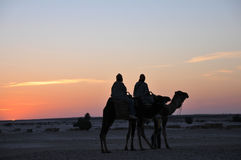 Sahara sunset Royalty Free Stock Photo