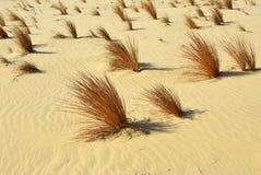 Sahara, trawa w piasku, Egipt Fotografia Royalty Free