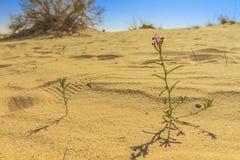 Sahara vår Arkivbilder