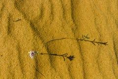 Sahara vår Arkivfoton
