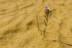 Sahara vår Arkivbild