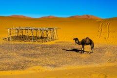 Sahara-Wüste Ð ¡ amel Marokko, Merzouga Lizenzfreie Stockfotografie