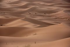 Sahara Wüste Stockfotos