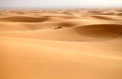 Saharan dunes Stock Images
