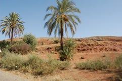 Saharan Oasis. Palm oasis in the Sahara, Morocco Stock Images