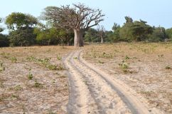 Dry savanna habitat in the Sahel belt region Senegal, Western Africa. The Sahel belt is a large region in Africa which borders the Sahara desert in its southern stock photos