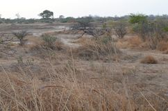 Dry savanna habitat in the Sahel belt region Senegal, Western Africa. The Sahel belt is a large region in Africa which borders the Sahara desert in its southern stock image