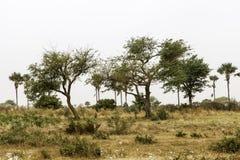 Sahel landscape Royalty Free Stock Image