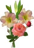 Sahnelilie und Rosarose blüht auf Weiß stock abbildung