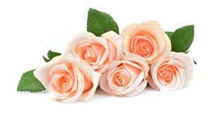 Sahnige Rosen der Blüte stockfoto
