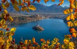 Saigné, la Slovénie - la vue aérienne encadrée de feuillage d'automne de l'église de l'acceptation de Maria sur le lac a saigné Image libre de droits