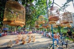 鸟唱歌竞争saigon/ho池氏极小的城市,越南 免版税库存图片
