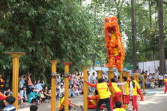 Saigon, Vietnam - 03 Feb 2014: Lion dancing on flower pillars Mai Hoa Thung at Tao Dan Park at the Lunar New Year Stock Photography