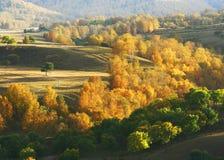 saihanba φθινοπώρου στοκ εικόνες