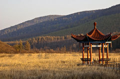 saihanba национального парка пущи Стоковые Фотографии RF