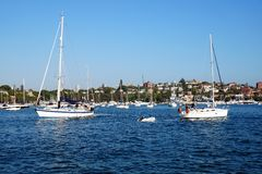 Sail Boats, Rose Bay, Australia. White sail boats or yachts, with sails down or furled, entering  and leaving Rose Bay, Sydney Harbour, Australia, with view to Royalty Free Stock Photo