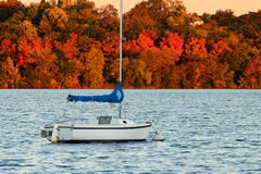 Sail Boat on Lake Harriet against Colorful Autumn Foliage Royalty Free Stock Photography