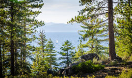Sail boat at Lake Tahoe framed by tree branches Royalty Free Stock Images