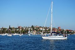 Sail Boat, Rose Bay, Australia. White sail boar or yacht, with sails down or furled, entering Rose Bay, Sydney Harbour, Australia, with view to exclusive Point Stock Photo