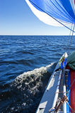 Sail boat walking. The sports sailing catamaran with blue sails dissects water of the big lake stock images