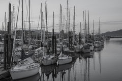 Sail Boats at the Campbell River Marina Royalty Free Stock Photos