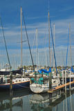 Sail Boats in The Marina at Dundedin, Florida Stock Photo