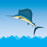 Sail fish Stock Photography
