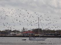 Sailboat με τα εκφοβισμένα πουλιά Στοκ Φωτογραφία